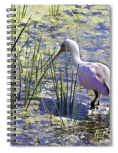 Roseate Spoonbill IIi Spiral Notebook