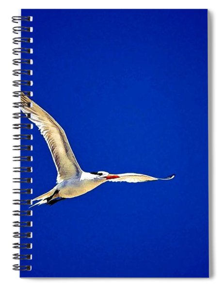 Royal Tern 2 Spiral Notebook