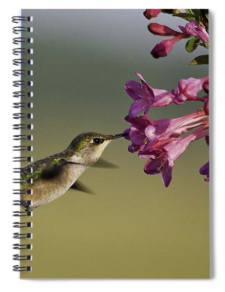 Ruby In Pink Spiral Notebook