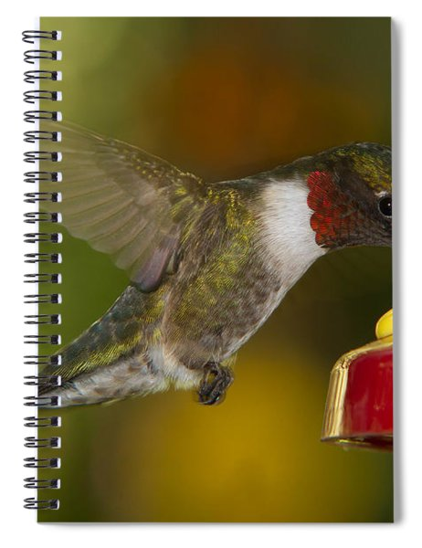 Spiral Notebook featuring the photograph Ruby-throat Hummer Sipping by Robert L Jackson
