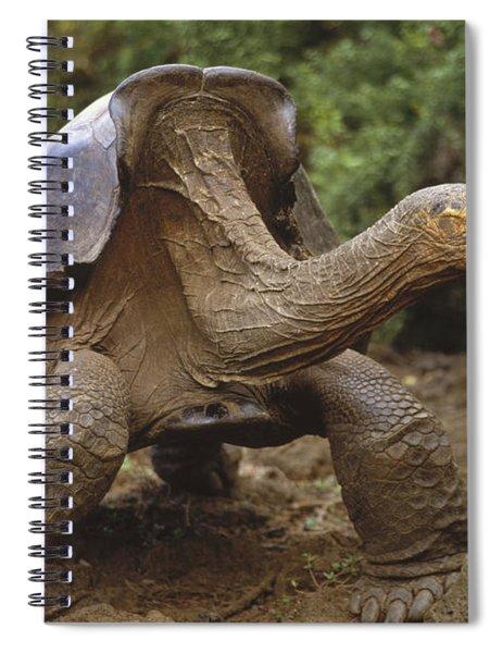 Saddleback Galapagos Tortoise Male Spiral Notebook