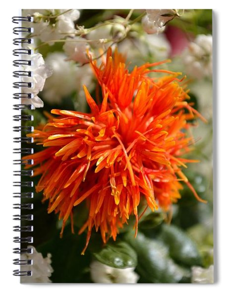 Safflower Amongst The Gypsophilia Spiral Notebook