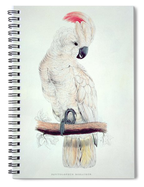 Salmon Crested Cockatoo Spiral Notebook