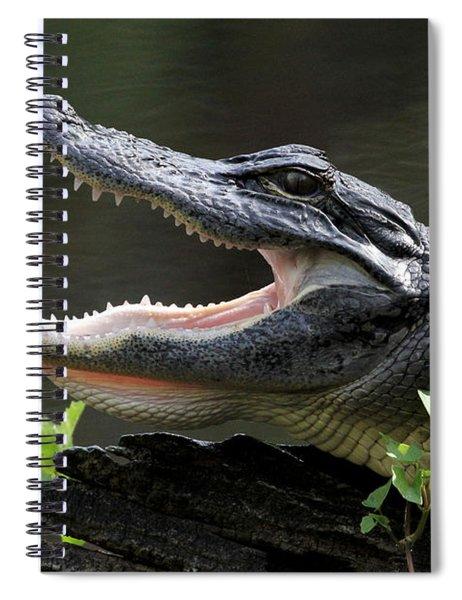 Say Aah - American Alligator Spiral Notebook