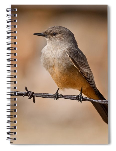 Say's Phoebe On A Barbed Wire Spiral Notebook