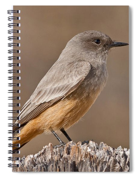 Say's Phoebe On A Fence Post Spiral Notebook