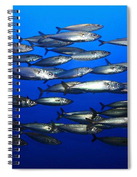 School Of Pacific Sardines 5d24927 Spiral Notebook