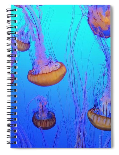 Sea-nettle Jelly Fish  Spiral Notebook