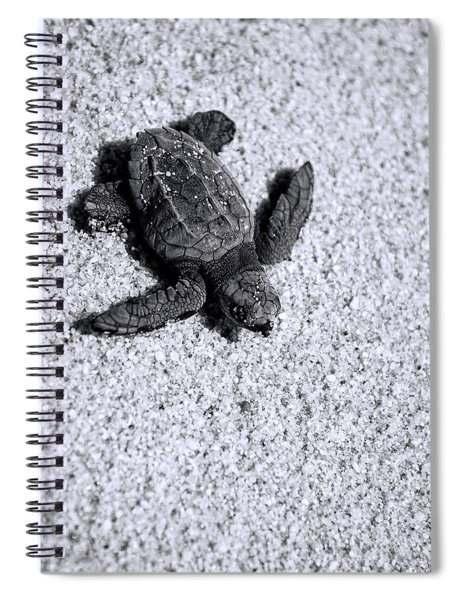 Sea Turtle In Black And White Spiral Notebook