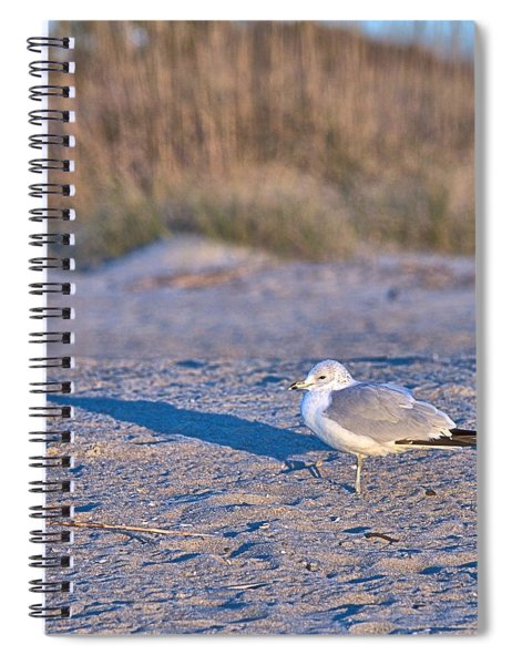 Seagull At Sunrise Spiral Notebook