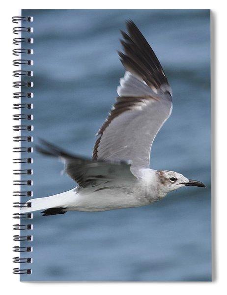 Seagull In Flight 11 Spiral Notebook