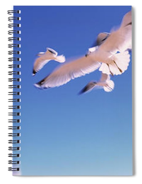 Seagulls Flying Along Route A1a Spiral Notebook