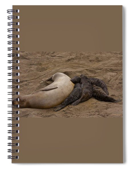 Seal And Pups Spiral Notebook