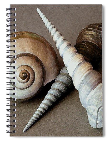 Seashells Spectacular No 24 Spiral Notebook