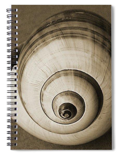 Seashells Spectacular No 25 Spiral Notebook