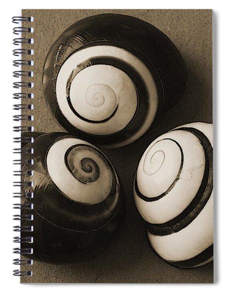 Seashells Spectacular No 28 Spiral Notebook