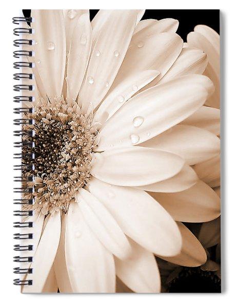 Sepia Gerber Daisy Flowers Spiral Notebook