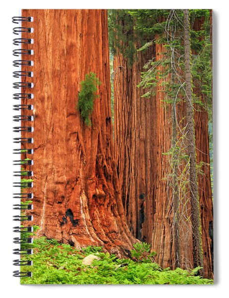 Sequoias Spiral Notebook
