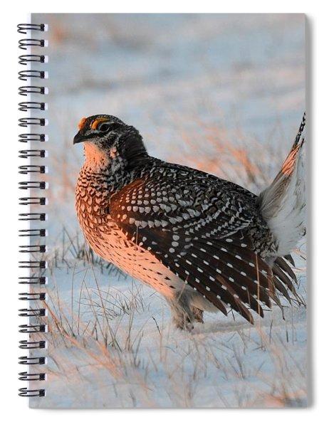 Sharptail Sunrise Spiral Notebook