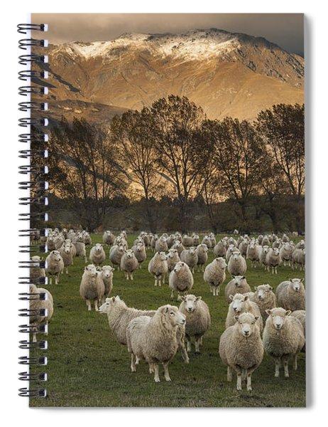 Sheep Flock At Dawn Arrowtown Otago New Spiral Notebook