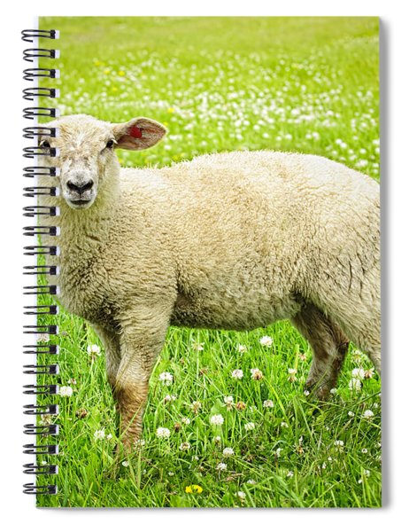 Sheep In Summer Meadow Spiral Notebook