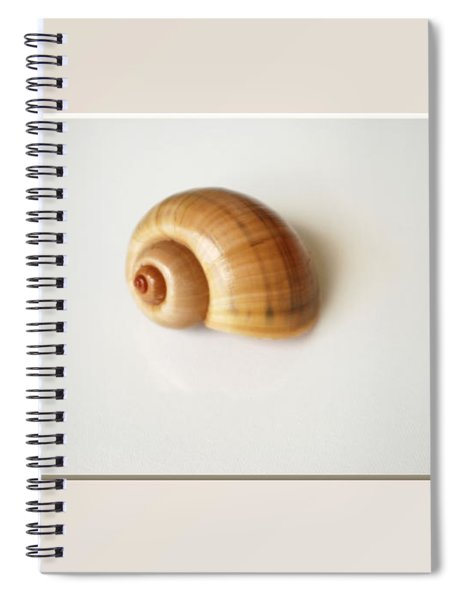 Shell. Delicate Colors Spiral Notebook