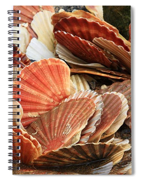 Shells On The Shore Spiral Notebook