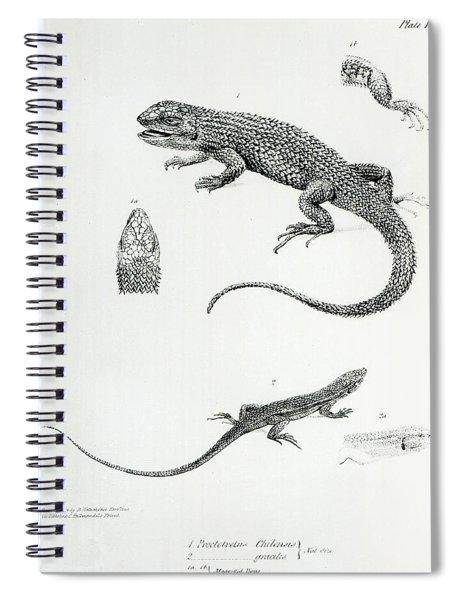 Shingled Iguana Spiral Notebook
