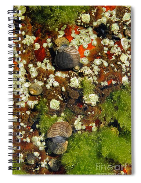 Shoals Tide Pool Spiral Notebook