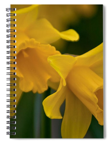 Shout Out Of Spring Spiral Notebook