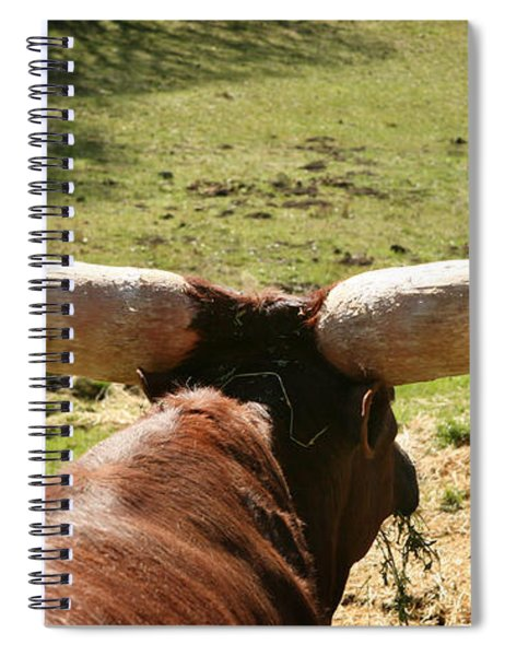 Showing Off My Rack Spiral Notebook