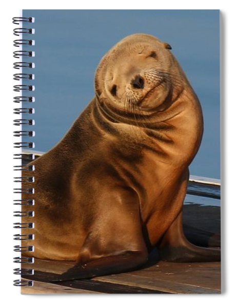Shy Sea Lion Pup  Spiral Notebook
