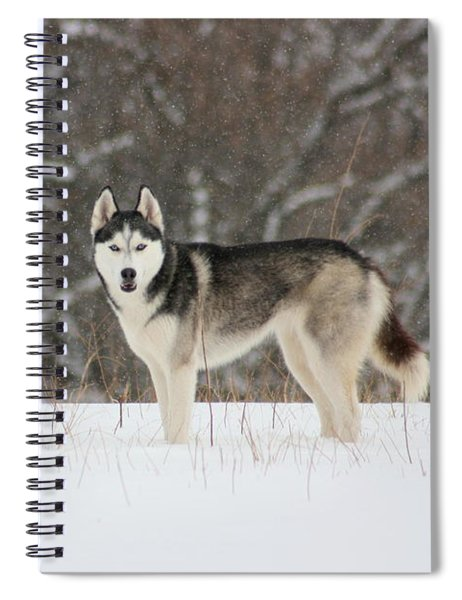 I've Been Spotted Spiral Notebook