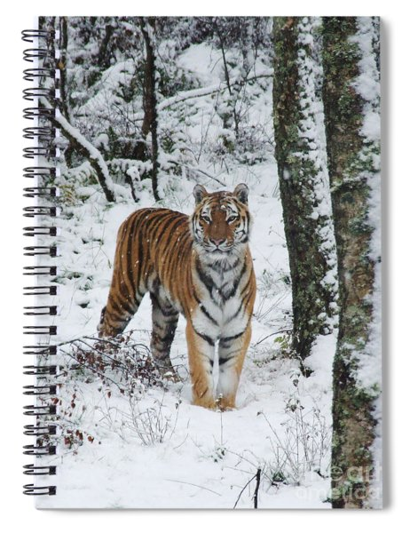 Siberian Tiger - Snow Wood Spiral Notebook