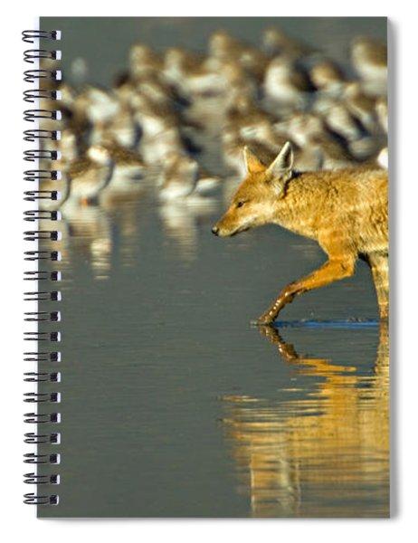 Side Profile Of A Golden Jackal Wading Spiral Notebook