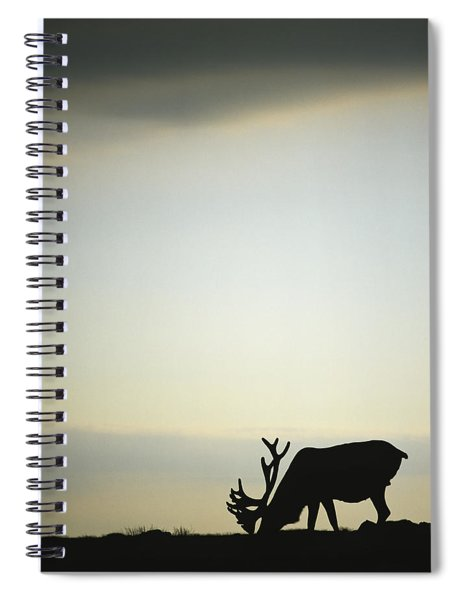 Silhouette Of A Male Caribou At Sunset Spiral Notebook