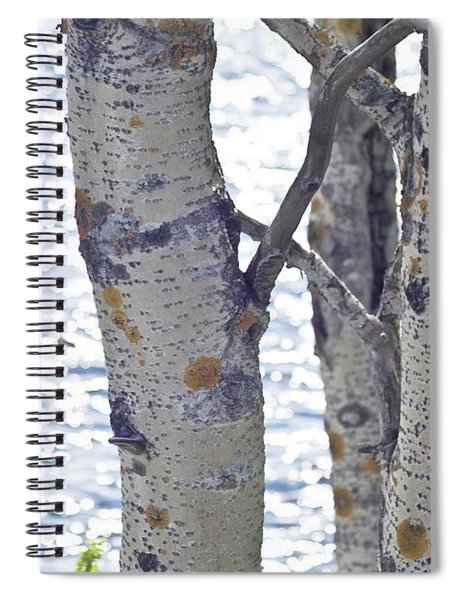 Silver Birch Trees At A Sunny Lake Spiral Notebook