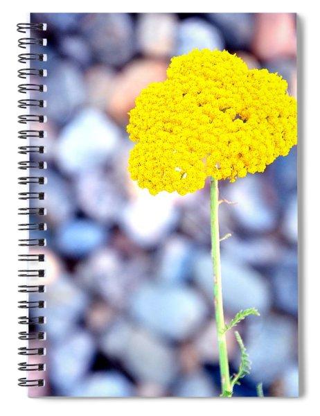 Single 16139 Spiral Notebook