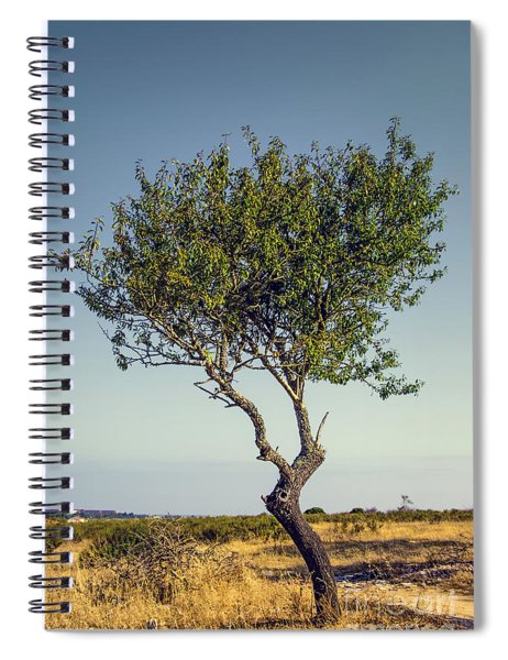 Single Olive Tree Spiral Notebook