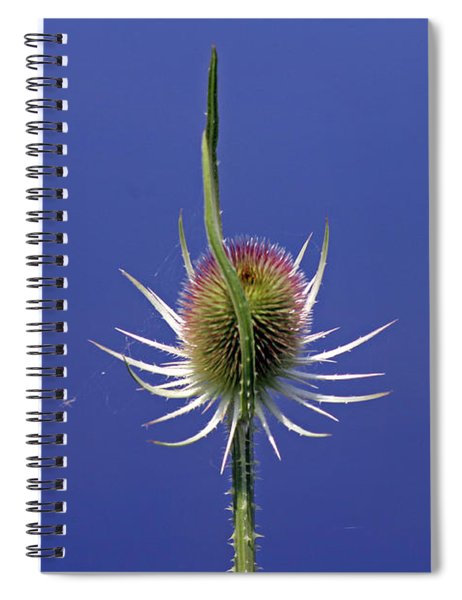 Single Teasel Spiral Notebook