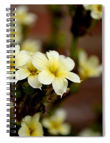 Spiral Notebook featuring the photograph Sisyrinchium Striatum by Scott Lyons