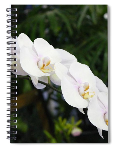Orchid Evelyn Reese Spiral Notebook