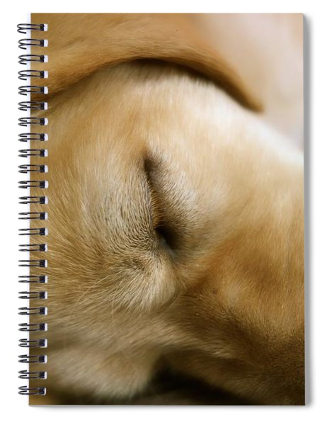 Sleeping Beauty Spiral Notebook
