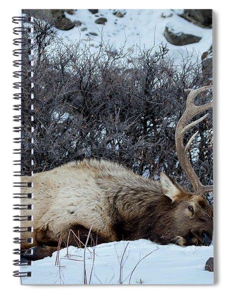 Sleeping Elk Spiral Notebook