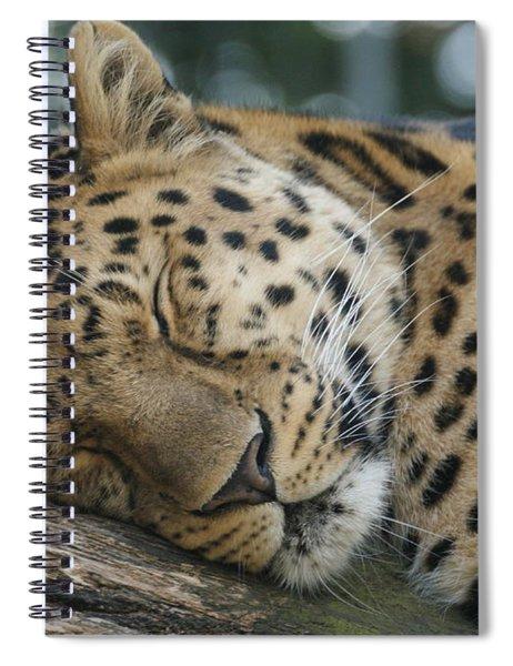 Sleeping Leopard Spiral Notebook