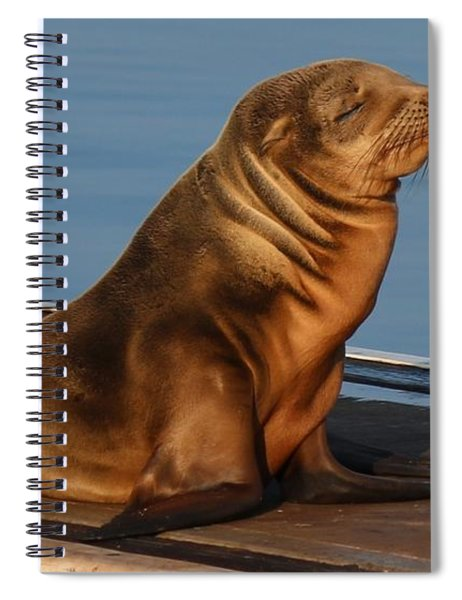 Sleeping Wild Sea Lion Pup  Spiral Notebook