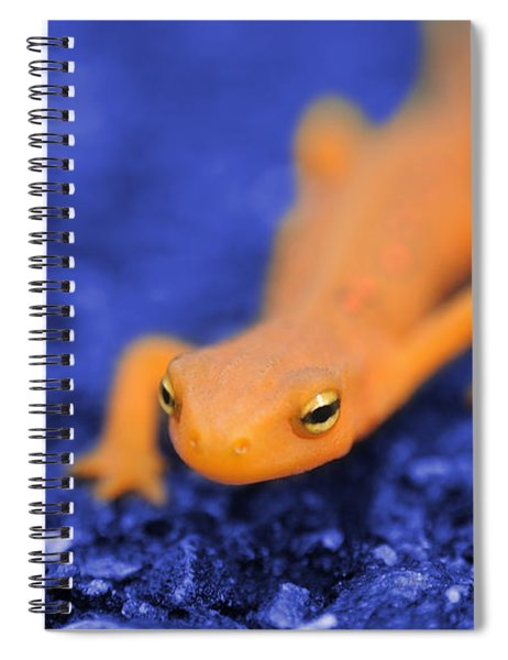 Sly Salamander Spiral Notebook