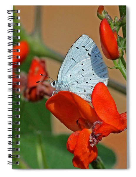 Small Blue Butterfly Spiral Notebook