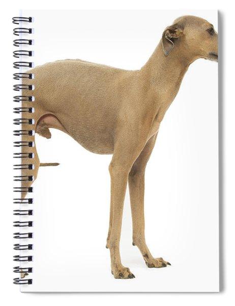 Small Italian Greyhound Spiral Notebook