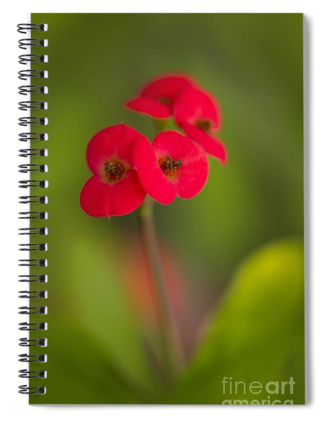 Small Red Flowers With Blurry Background Spiral Notebook